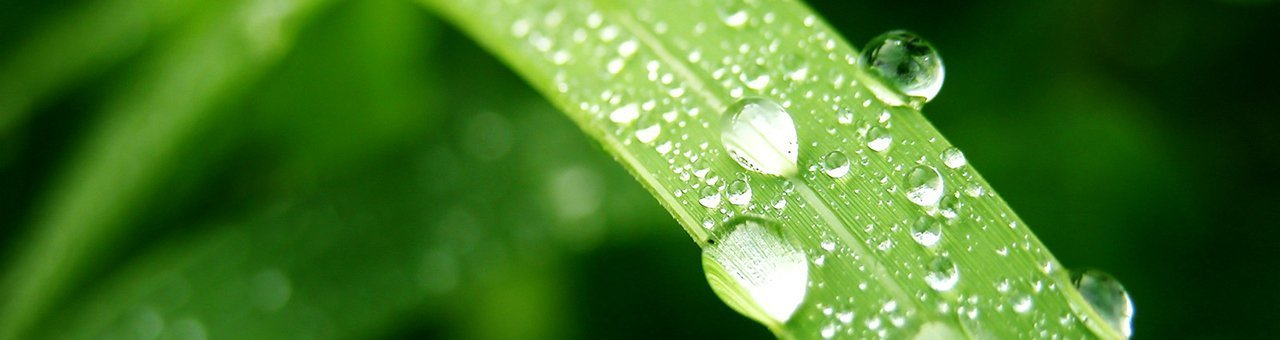 leaf_with_droplet_01.jpg