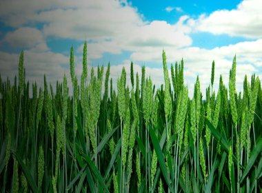 Cereale_Header_FMC_v2.jpg